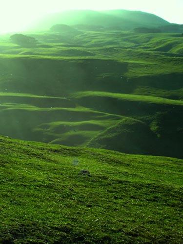 New Zealand hillsides